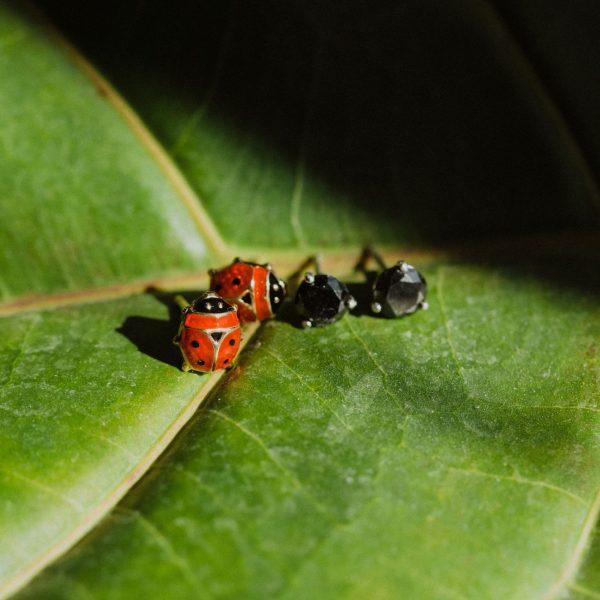 , Ladybug Studs